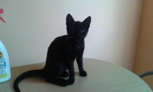 czarna1