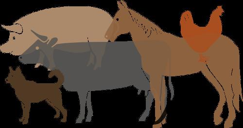 Portal ochrony praw zwierząt – kliknij w obrazek